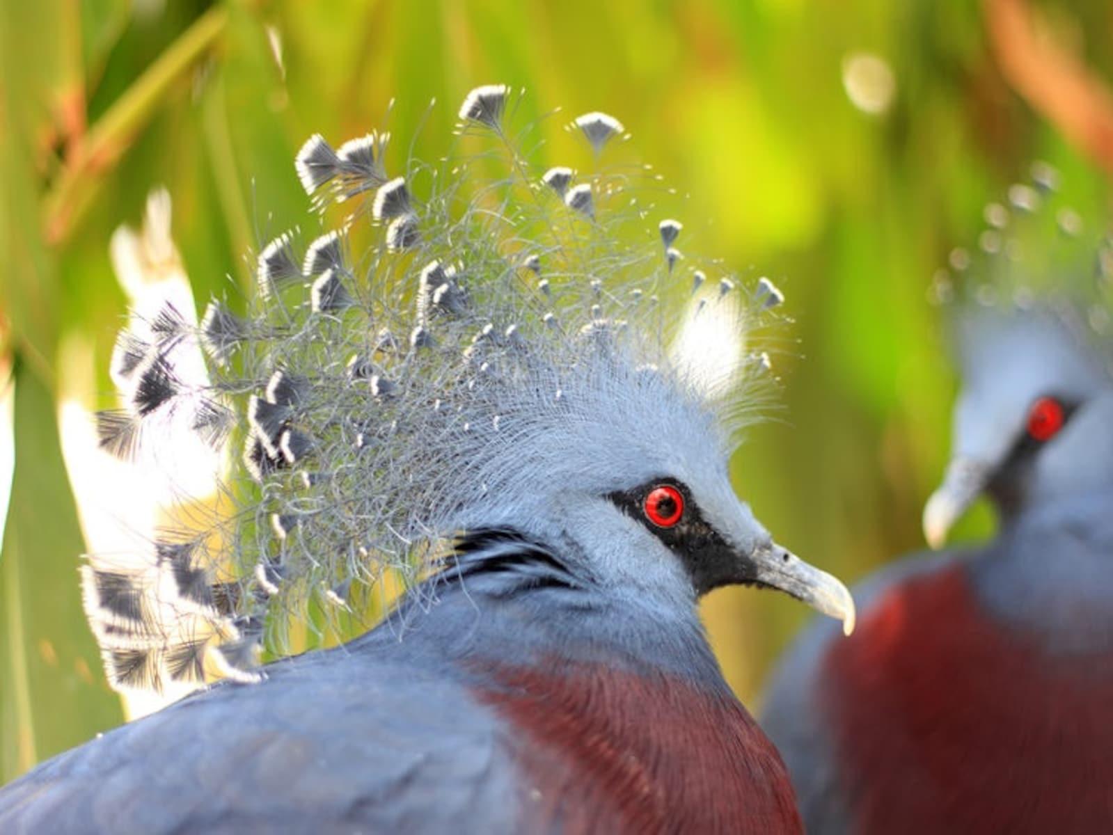パプアニューギニアのおすすめオプショナルツアー
