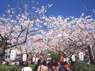 鎌倉で行きたい桜の名所