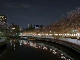 東京の水辺で見られる夜桜ライトアップ