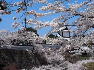 北陸新幹線で行く、古都・金沢の桜を巡る旅