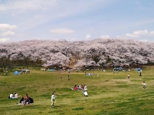 横浜でおすすめのお花見スポット