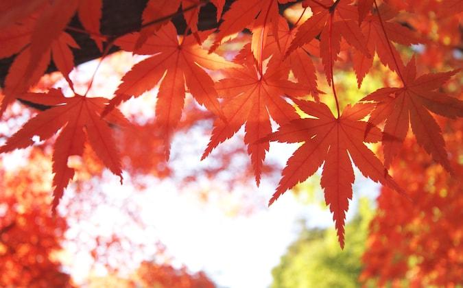 紅葉に温泉 秋を楽しむ旅【2016年】