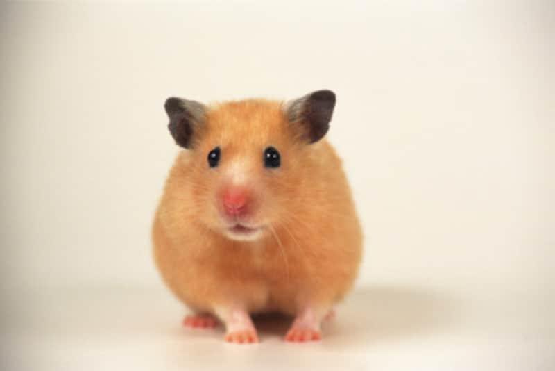 ネズミの画像 p1_15