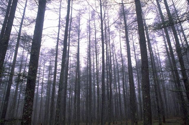 相続税にお悩みの方、朗報です 自社株と山林の評価が変わった
