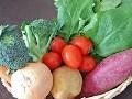 野菜の栄養と調理のコツ