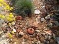 留守中の家庭菜園の水やり方法