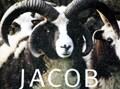 稀少な英国羊ジェイコブの毛を使ったマフラー&帽子 ジェイコブウールの小物たち
