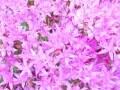 フラワーアレンジに役立つ!花の小事典vol.21 【10月の花】弁慶草