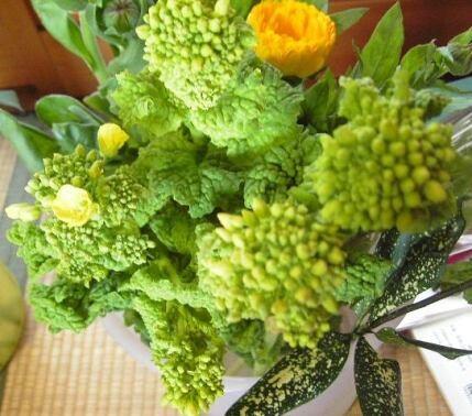 黄色が春を連想させる菜の花