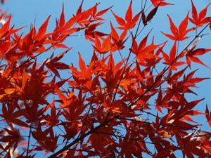 紅葉のカラーコントロールは、露出補正で