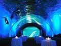 オトナが楽しむ夜の動物園&水族館