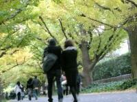 神宮外苑の「いちょう祭り」を歩いてみよう
