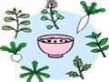 七草粥の由来と春の七草