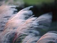 秋冬の風情をあらわす、風の名前