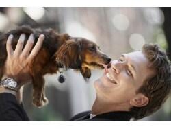 「犬好き」「猫好き」でわかる相性と恋愛傾向