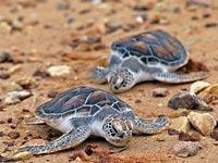 海がめの産卵時期に是非足を運んでもらいたいビーチ(c)タイ政府観光庁