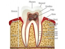 歯科医が解説!歯の神経を抜くとどうなるのか