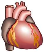 虚血性心疾患で心室性不整脈がたくさん出ると要注意です。