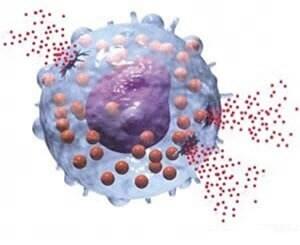 アレルギー・免疫の基礎用語