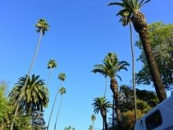 ロサンゼルスの気候・気温 ベストシーズンを知ろう
