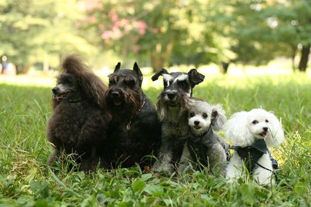 大切な家族、ペットと一緒に賃貸に住む