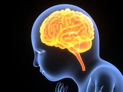 脳が再び急成長を始めます