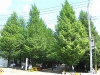 日吉、緑豊かなキャンパスと商店街、坂の街