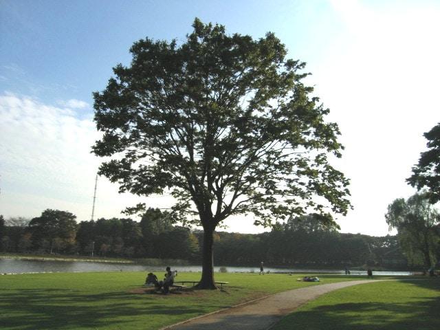 公園近くのメリット、デメリットは?