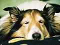老犬・高齢犬のサインと老化度チェック
