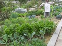 家庭菜園のポイント