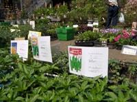 家庭菜園の種と苗の選び方