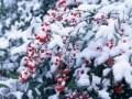 健康歳時記(冬) 12~2月の健康管理術