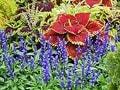 9~11月の秋から晩秋に咲く花