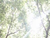 酸素と紫外線