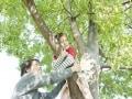 葉桜に要注意!毛虫刺されの対処法