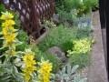 坪庭や狭小の庭を上手に生かしたガーデニング