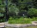 人も動物もいきいきと「高知県立のいち動物公園」