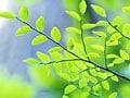 庭木・花木の植え方