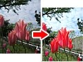 Photoshop Elementsで地味な花の写真を明るく鮮やかに