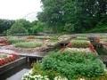 日本最大級のフラワーパーク 「とっとり花回廊」