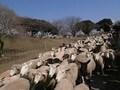 東京ドーム50倍の敷地で動物にふれあえる マザー牧場
