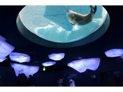大阪・海遊館に「新・体感エリア」がオープン