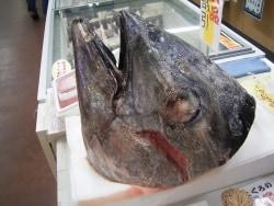 神奈川の「三浦三崎港」はマグロと自然の宝庫