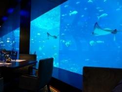シンガポールの水族館に鉄人シェフの店がオープン!