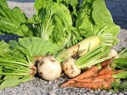 初心者のための秋冬野菜の害虫対策と駆除