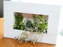 植物をアートに! ちょい DIYで作る額縁コンテナ
