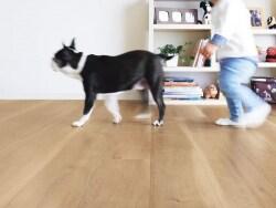 犬と暮らす家にリフォーム ペット用床材の選び方