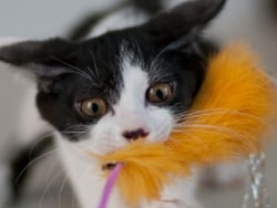 食欲の秋、猫と遊んでダイエット