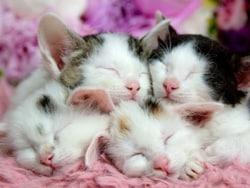 磁石でくっつく子猫たち