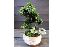 小さな盆栽の作り方(植え込みの基本)